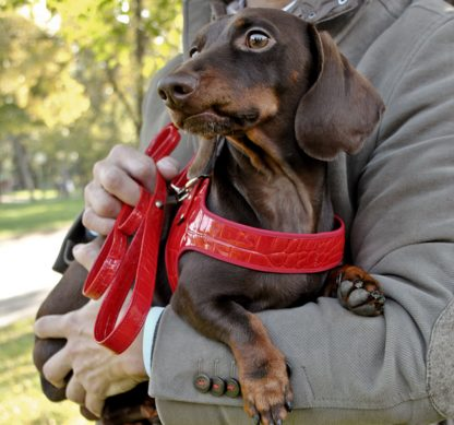 dog harness dachshund